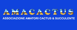 Amacactus