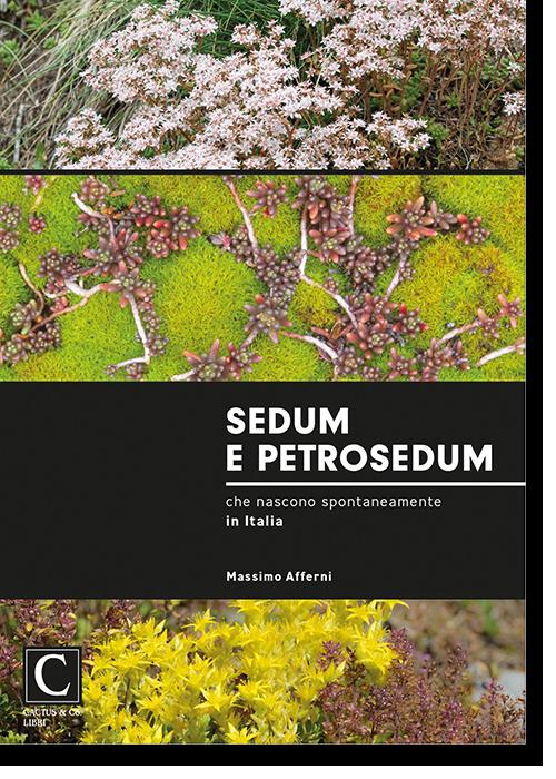 Sedum e Petrosedum che nascono spontaneamente in Italia